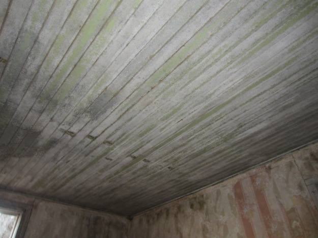 wainscot ceiling