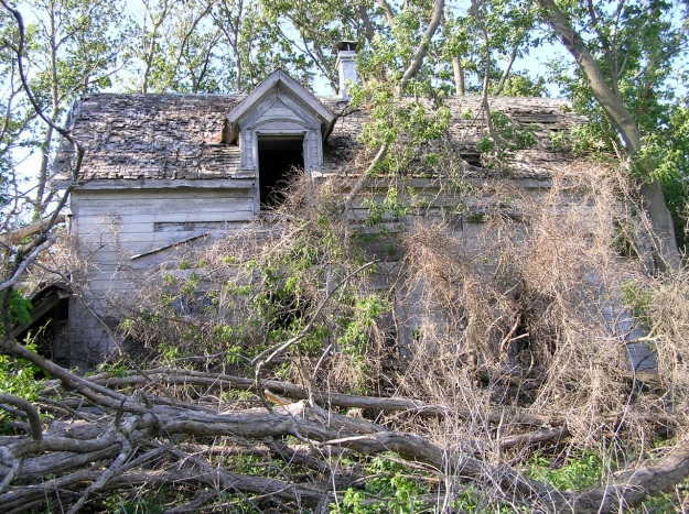 yikes!  the owner had pushed trees up against the front of the house for years.